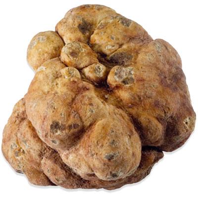 Whitish Bianchetto Truffles